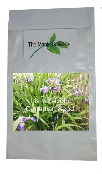 Iris versicolor - Canadian Blue Flag - 30 Seeds