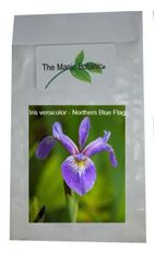 Iris versicolor - Northern Blue Flag - 30 Seeds