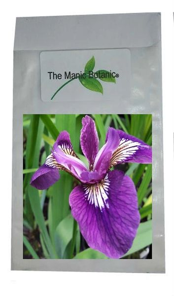 Iris versicolor - 'Deep Purple' - 15 Seeds