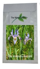 Iris missouriensis- Rocky Mountain Iris - 10 Seeds