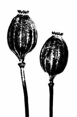 kykeon plants