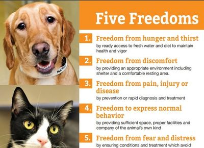 Five Freedoms, Scott County Iowa No Kill