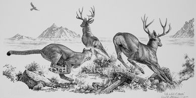wildlife paintings, wildlife prints, art of animals, animal prints, deer art, elk art, bird prints
