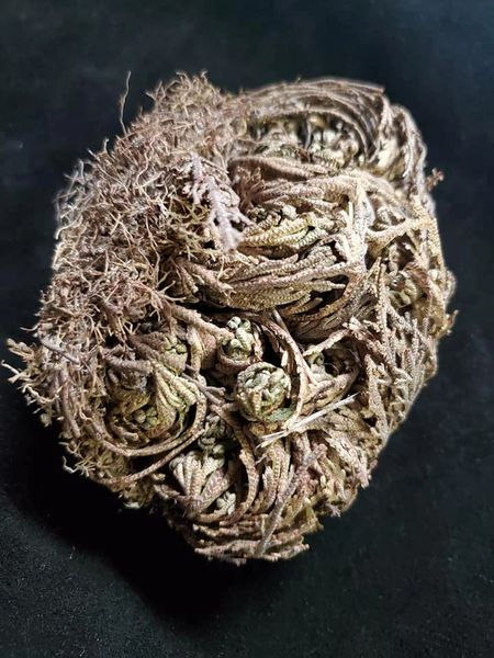 Smudge Bundle: Flower de Jericho
