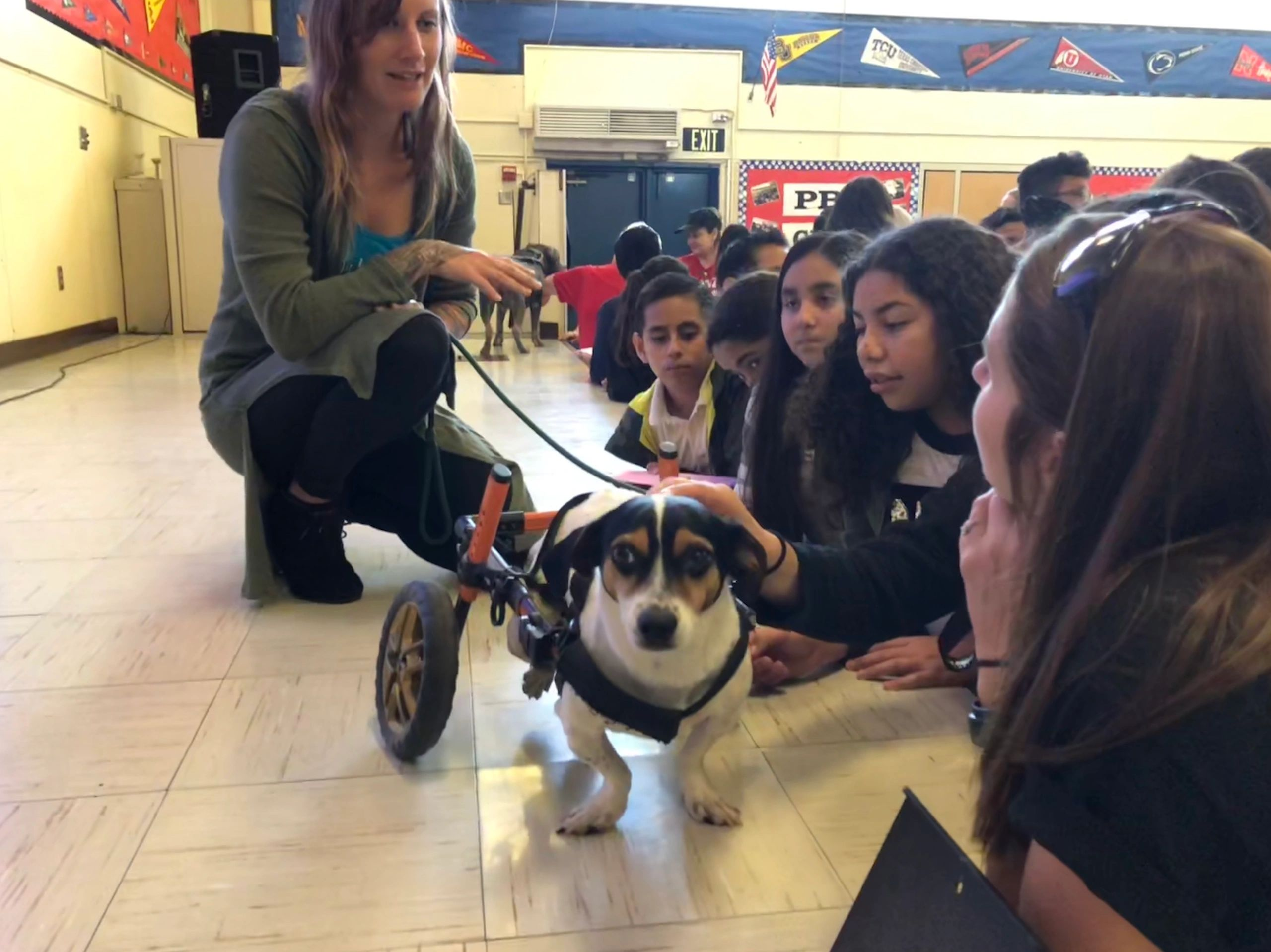 Handicapped dog in wheelchair as therapy dog with kids in a classroom learning about compassion
