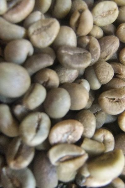 500 grams Native Organic coffee (Green Beans)