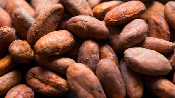 100% Organic Criollo Cacao Beans (Raw) 500g