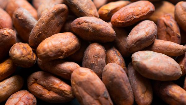 100% Organic Cacao Beans (Raw) 1 KG