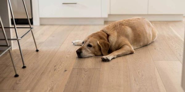 Hardwood Floor is also safe for our man's best friend.