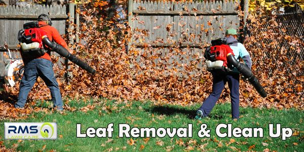 Our LEAF REMOVAL services for residential and commercial clients in St. Louis Metro