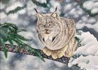Color Pencil, bobcat in the snow