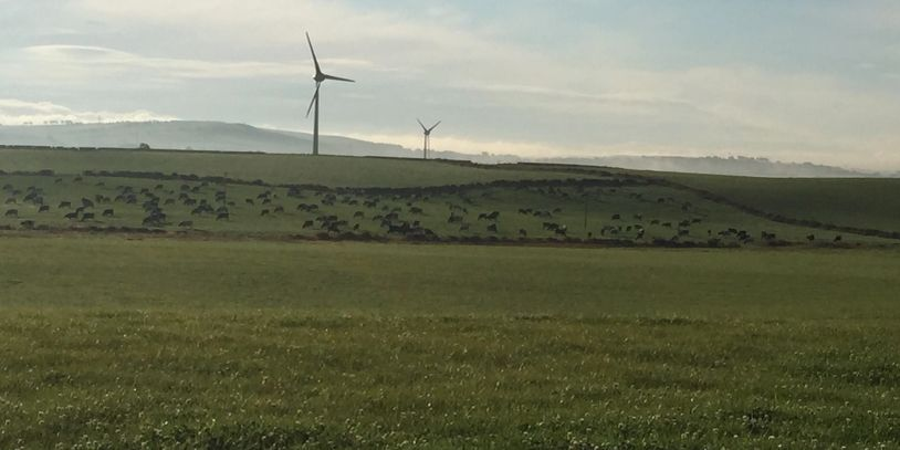 Field with wind turbines in the horizon