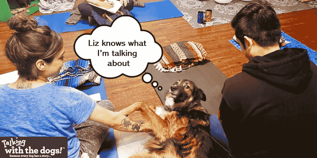Animal Communication to find out what dogs are thinking