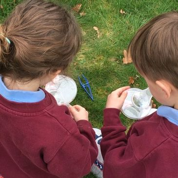 KS1 students looking at bugs and buds