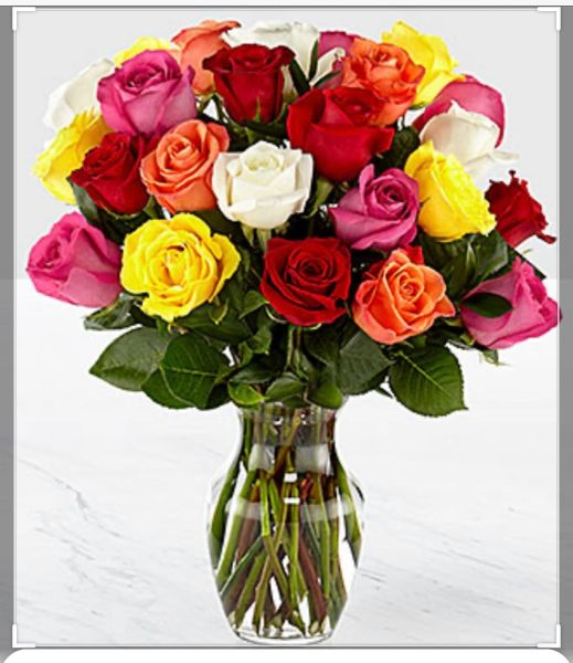 Real Rainbow Rose Plant