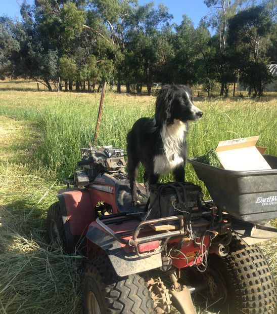 Max arriving on the farm in 2014 eagerly working towards a herding degree in cattle pigs and chicken