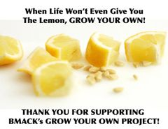 BMack's Lemon Seed
