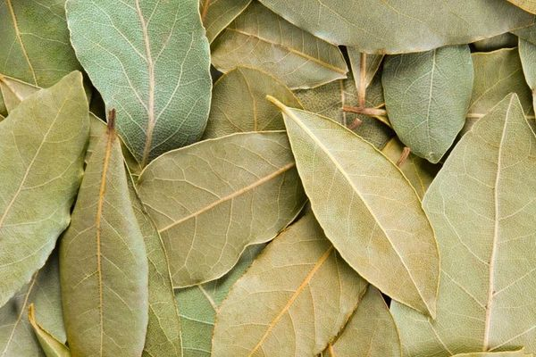 Magickally Enhanced Bay Leaves - Offering For Spirits and Entities - Protects, Banishes and Breaks Curses - Many Uses