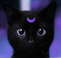 Samhain 2020 Conjuring Of Most Magickal Violet Flame Masheba -Spell Casting Healing Familiar