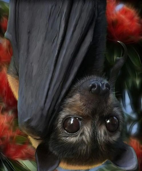 Male Ancient Bat Vampire - Gives Psychic and Medium Abilities - Banishes Evil and Makes Spells Manifest **SALE**