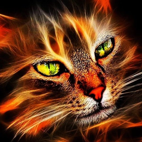 Saifullah Sneak Peak - Cleo's Commander Gold Flame Masheba Commands All Types Including Black and Violet Flame Mashena