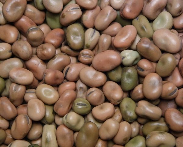 Mojo Wish Beans ~ Simple Magick for Simple Wishes with Powerful Result - Great for Luck!