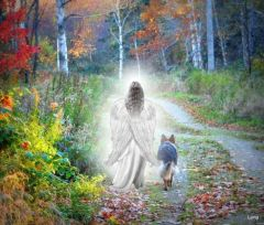 Pet Portal~ Reconnect with a Deceased Pet * Dreams, Visions, Emotions and More