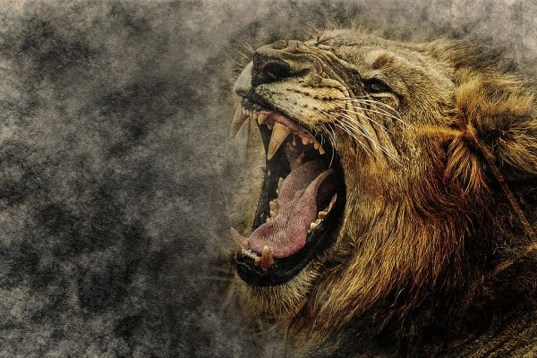 Complete Spell of Courage ~ Conquer All Fears Release Your Inner Lion