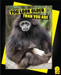 You look older than you are Animal11