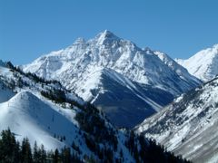 Frozen Summit - Organic Oolong