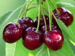 Cherries -Semi-sweet, 1/2 pint container