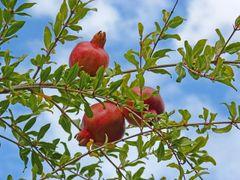 Pomegranates* - $3 each