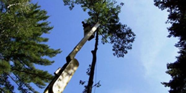 Tree work, tree removal, tree maintenance, ISA certified arborist, arborist