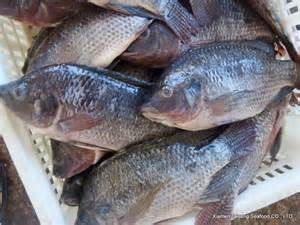40lb Tilapia Whole Clean 350-550