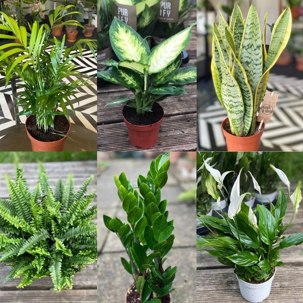 3 HOUSEPLANTS FOR £35 PLANT DEAL!