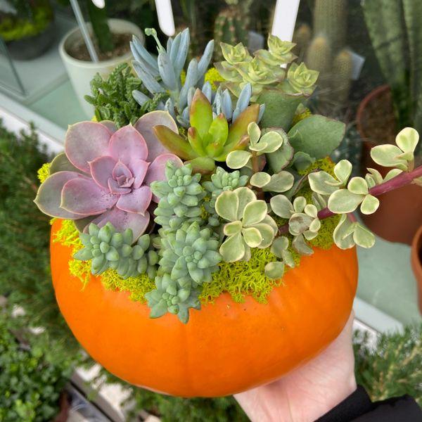 Halloween Succulent Pumpkin Workshop 🎃
