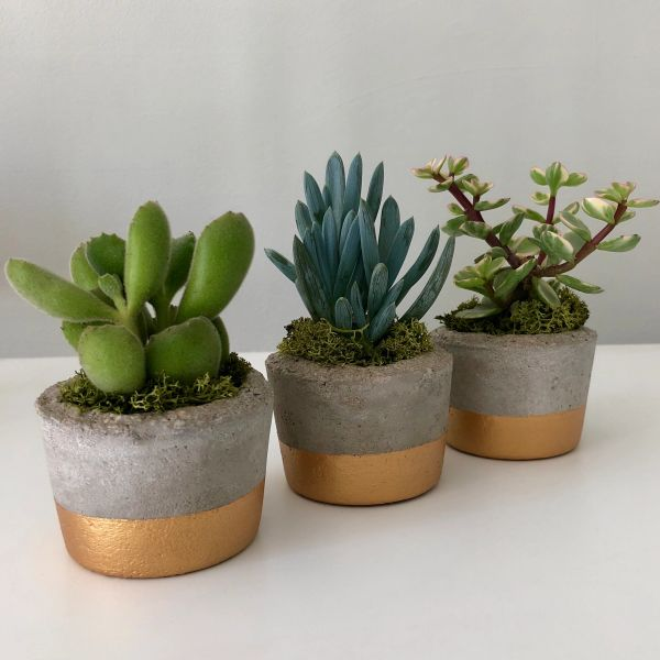 Trio of Concrete Rustic Cactus/Succulent Pots With/Without Plants