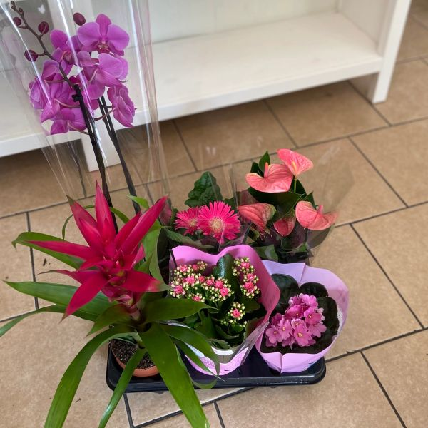 FLOWER POWER! - Houseplant Collection (GLASGOW ONLY)