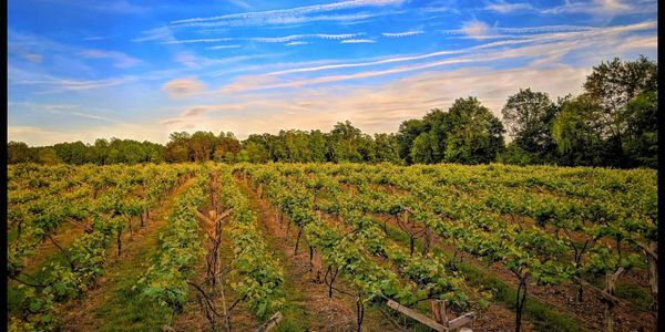 landscape picture of Byrd Cellars Vineyard