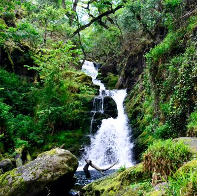 Guided Walk to O'Sullivan's Cascade in Killarney National Park