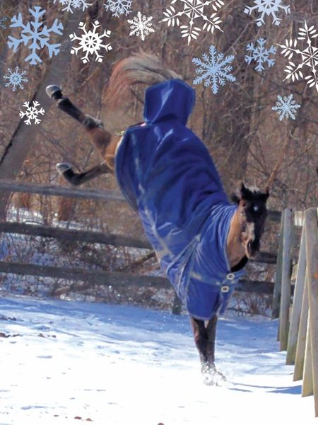 Christmas Card: Bucking Horse - Happy Bucking Holidays