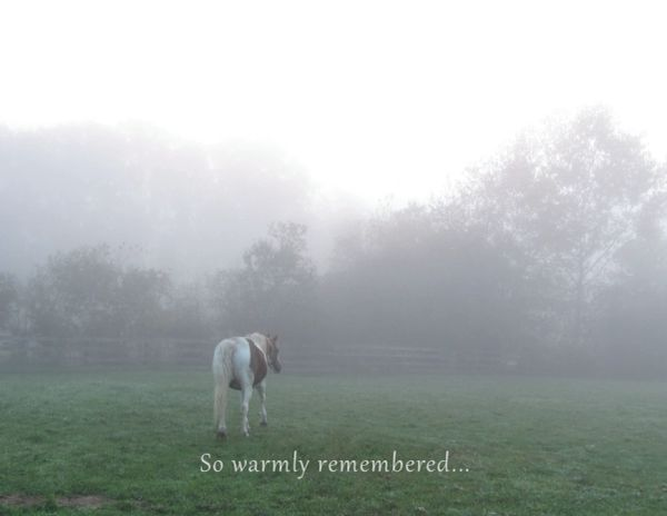 Sympathy Card: So warmly remembered...