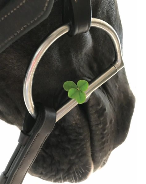 "GC Blank Clover: ""D"" ring snaffle with 4-leaf clover"