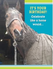 GC Mud: It's your birthday! Celebrate like a horse...