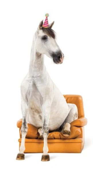 GC B Horse in Chair: I know, too funny!