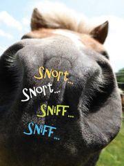GC B Stinkin': Snort, snort, sniff, sniff