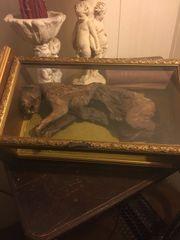 Sold Mummified Cat Specimen