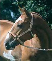 Leather Horse Halter and Leather Lead