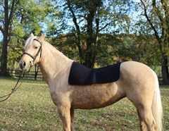 Therapeutic Western Saddle Liner