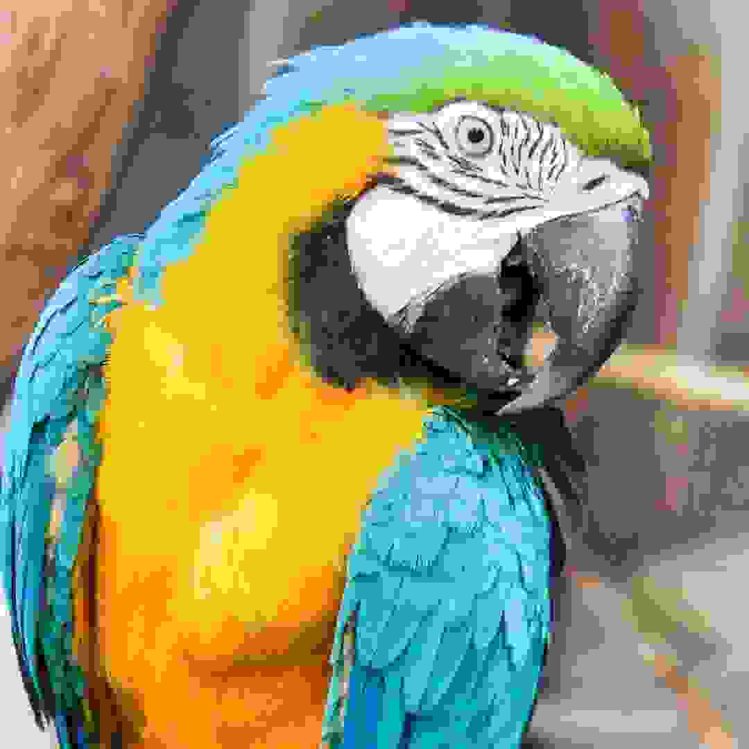 MY OLD AMAZING PARROT 2017 I TOOK THIS PICTURE ONE DAY